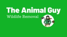 The Animal Guy Wildlife Removal Arkansas